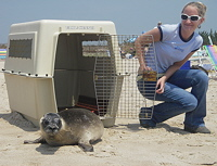 Marine Mammal Stranding Center